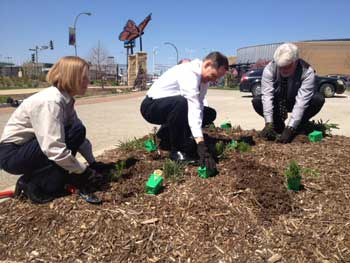 Mayor-planting-milkweeds