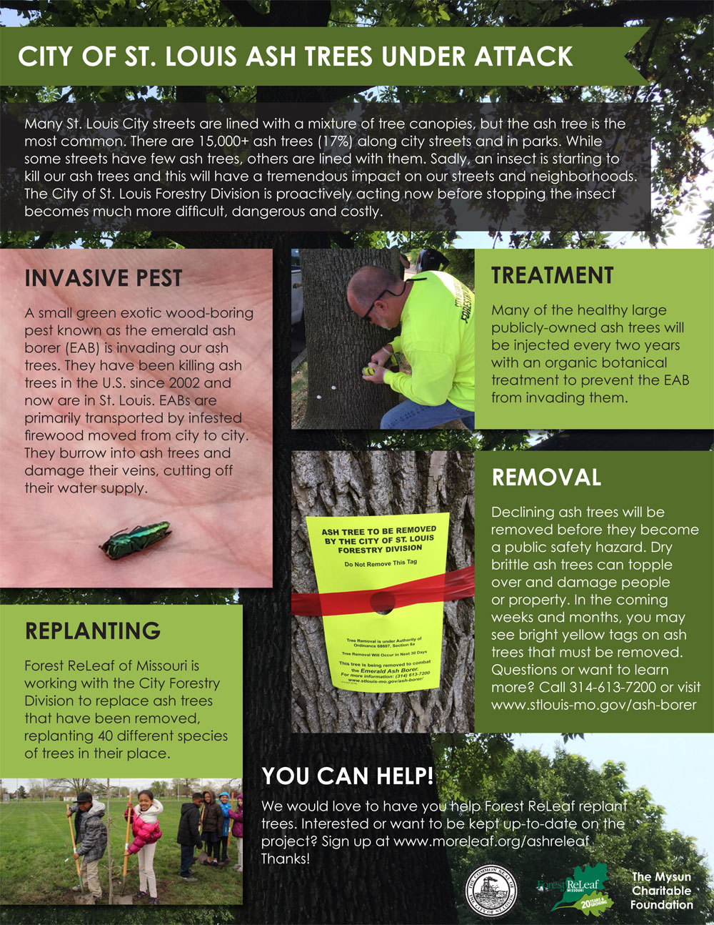ReLeaf Ash Trees Under Attack Infographic