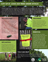 Ash Trees Under Attack Infographic Thumbnail