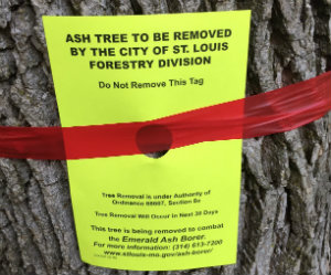 EAB Treatment sign applied to infected ash trees