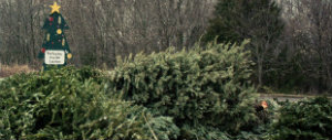 Christmas Trees Recycling Drop Off