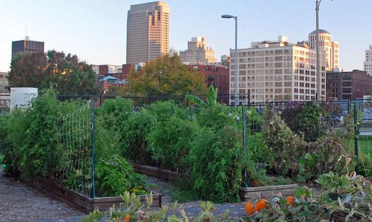 Downtown St. Louis Community Garden