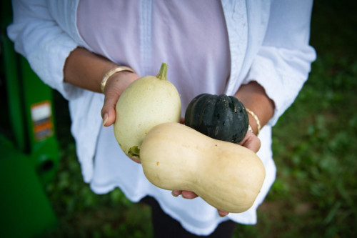 Woman's hand holding three types of fresh squash