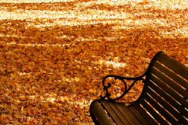 Fall wooden park Bench